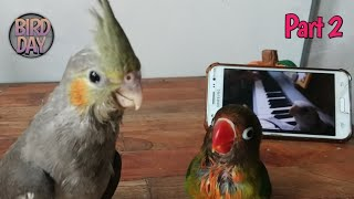 Melatih Burung Falk/Cockatiel Bernyanyi ‼️  PART 2   #DailyVlog
