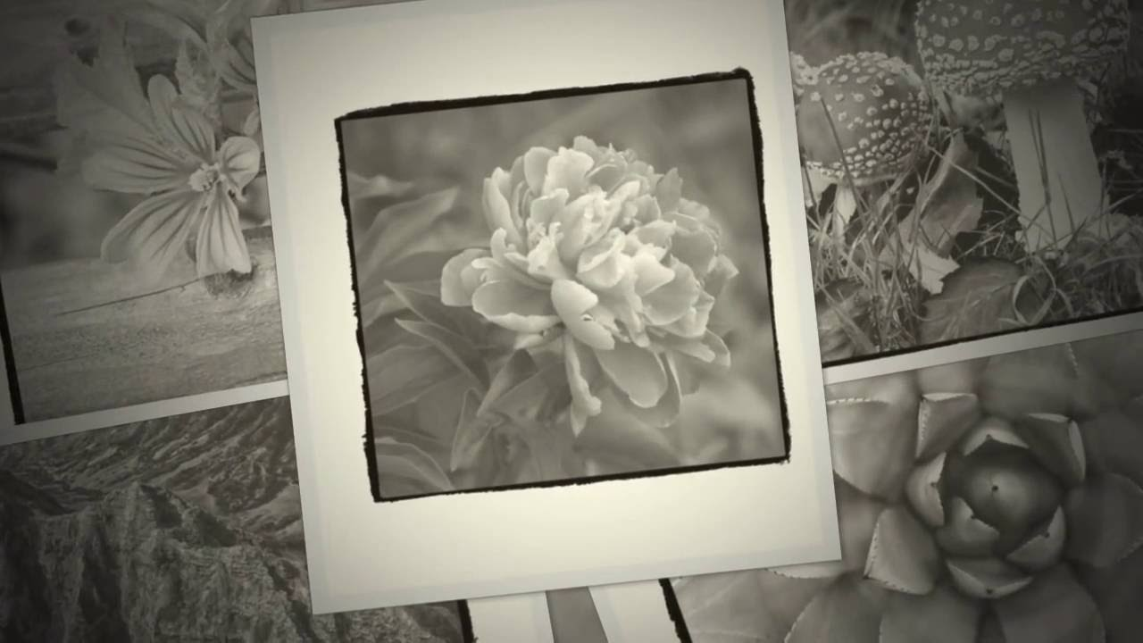 Introducing the Beautiful Nature Grayscale Coloring Book: Look ...