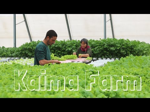 Kaima - Hydroponic Farm in Jerusalem