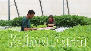 Creating jobs with urban farming - hydroponics in Jerusalem - HWT #23