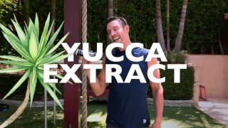 Do You Think About Yucca Extract?