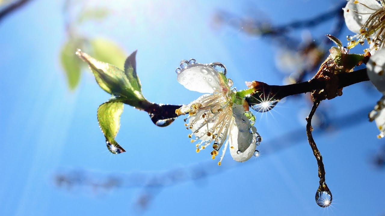Поздравление с Первым Днем Весны! Ура Весна пришла ...