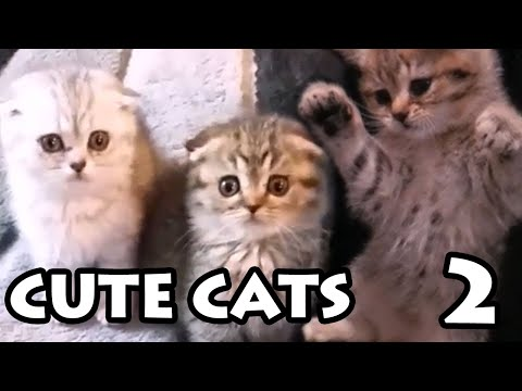 Best Cute Cat Videos #2 | Try Not to Aww Compilation 2020