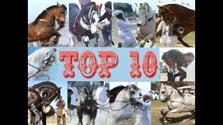 Best horse dance in pakistan Top 10