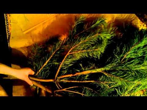 Еловые ветки - Уличные елки