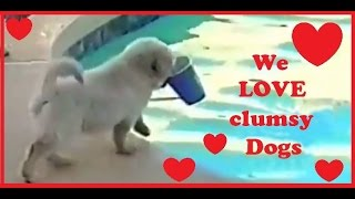 We LOVE dumb and funny DOGS! Best DOG FAIL Compilation EVER