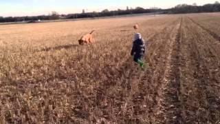 Dogue De Bordeaux Walking With Lewis Dood