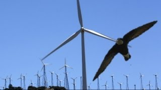 British birdwatchers witness rare swift fly into wind turbine