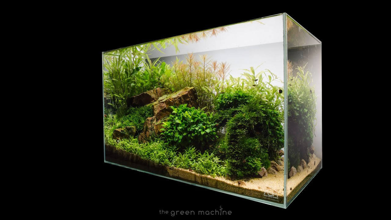 Nano Zee Aquarium Verlichting Escarpment Nature Aquarium By James Findley Step By Step