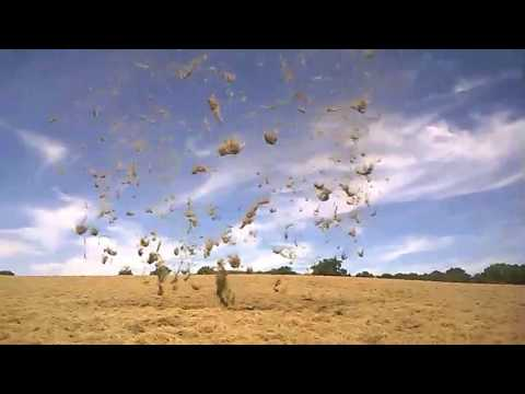 Dust Devil Blows Hay Into the Air in West Sussex