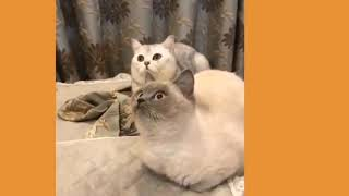 Cute Dogs And Cute Cat Funny Videos Compilation