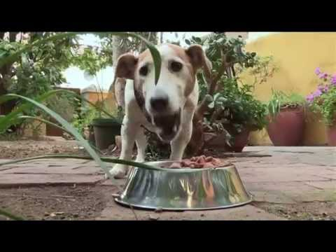Afternoon Express | Life Stages Of A Dog | 14 Oct 2015