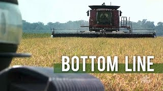 Bottom Line -- Rice Prices Sink as Flooding Dries Up