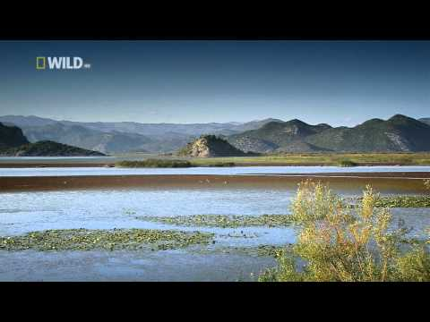 National geographic Wild - Balkans 2/3 HD