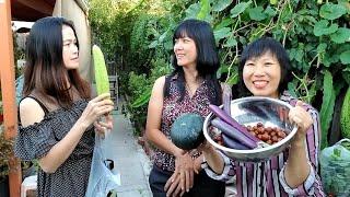 vườn nhà được bạn bè youtuber tới hái trái cây ( Người Việt ở Mỹ )