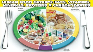 IN Hindi & Urdu [Food Groups And Sources] and Protein Vitamins Fat 2019