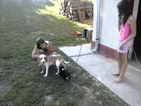 Lányok és kutyák :) letöltés