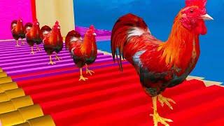 Con gà trống - Nhong nhong nhong - Nhạc thiếu nhi vui nhộn Bin Bin Music
