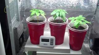 Homemade Pc Grow Box:white Widow