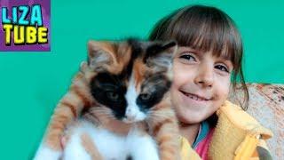 Приключения Лизы в Деревне Гигантская ТЫКВА и МОРКОВЬ Собаки, кошки  \ LizaTube
