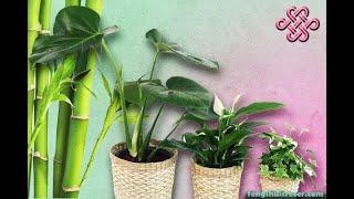 Feng Shui de las plantas: El cactus elimina las malas energías y atrae buenas vibras