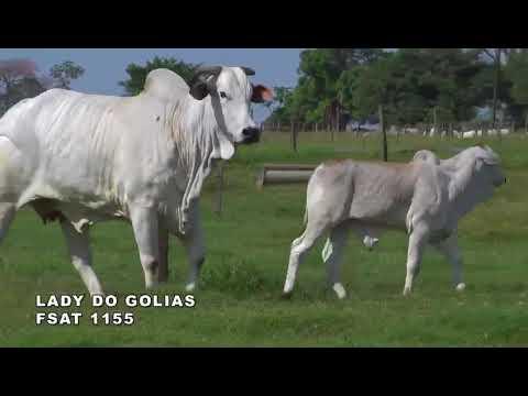 Lote 13   Lady do Golias