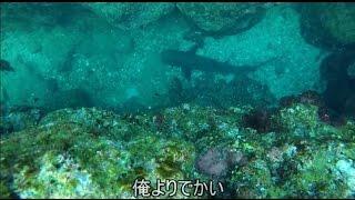ブログも見てね!この日の関西お魚突きhttp://ameblo.jp/osaka-osakanat...
