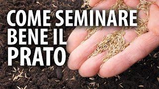 Come Seminare Bene il Prato