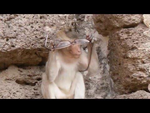 развивающий мультик басня И.Крылова Мартышка и очки