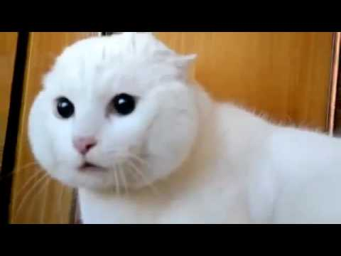 Funny Cats scared by mask