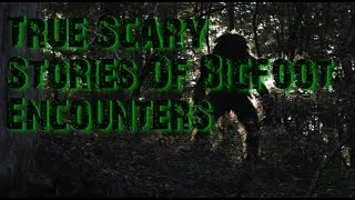 True Scary Stories Of Bigfoot Encounters Collaboration With HollyWizzle And The Slumlocker