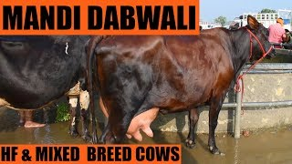 यहाँ मिलेगी बढ़िया गाय   Best Holstein friesian cows