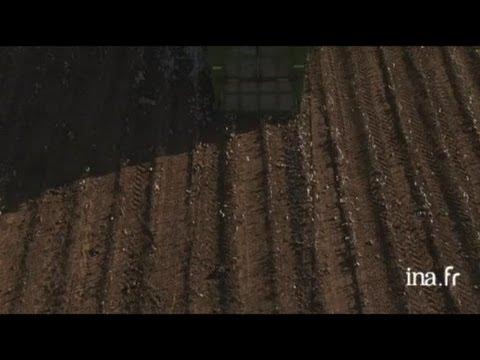 Etats Unis, Texas : récolte du coton