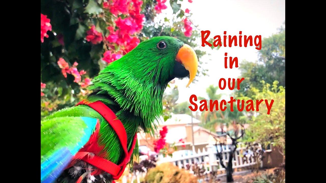 Rainy days at the PDS Sanctuary