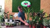 Кашпо для цветов купить по низким ценам в интернет-магазине «emdesign». Доставка!. Телефон в москве: +7 (495) 407-05-29.