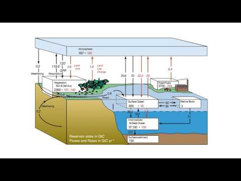Introduction to the carbon cycle