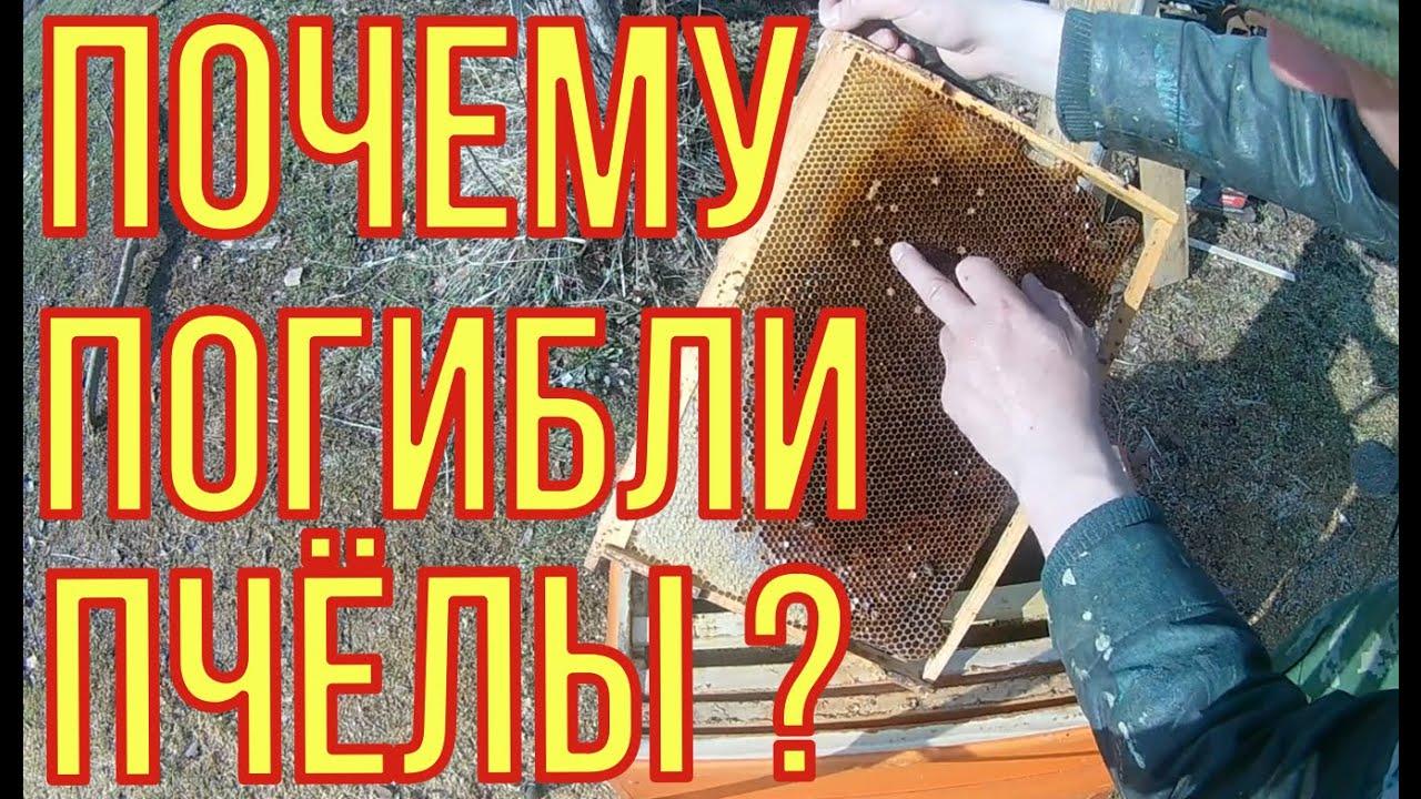 Почему погибли пчёлы. Пчеловодство для начинающих.