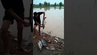 Cilp lầy lội ở hồ câu cá 13 mẫu 7