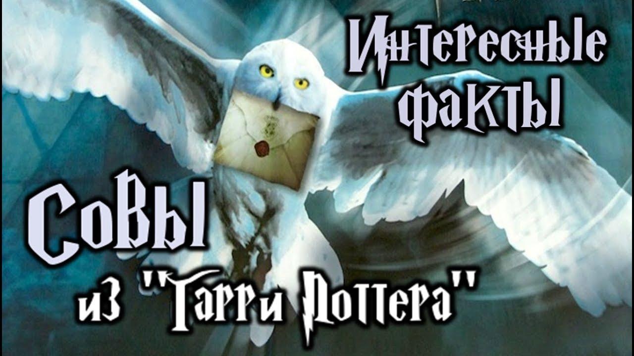 """Совы из """"Гарри Поттера"""" - Интересные факты - YouTube"""