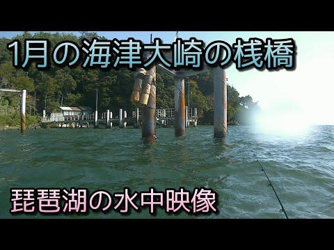 #琵琶湖 #水中映像  1月の海津大崎の桟橋