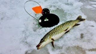 Приколы на рыбалке Лучшее 2019 Ловля огромного сома и щуки