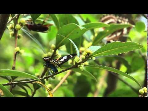 Moth Magic:The Beauty of Taiwan Moths(幻蛾 臺灣蛾類之美 英)