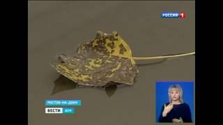 видео Какая будет зима 2015-2016 в России