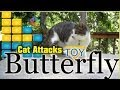 Cat With Butterfly Toy Has A Blast - HD Video