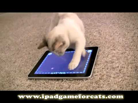 cat iphone game for cats the world s greatest for 10349