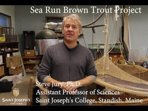 Sea Run Brown Trout Project With Professor Steve Jury