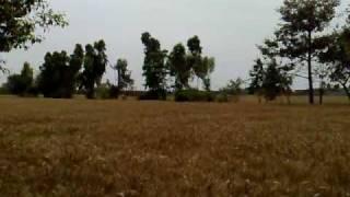 Rabwah Wheat Fields
