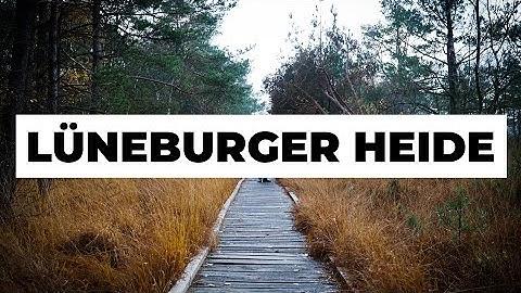 LÜNEBURGER HEIDE: 3 tolle Ausflugstipps - umsonst und draußen | fernwehsendung