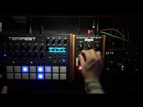 Basic Dub (DSi Tempest, Moogerfooger MF-105M MIDI Murf, Strymon Timeline)