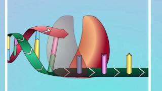 hiv mechanisms of action of nrtis